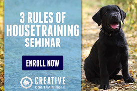 Creative Dog Training On Site Services Seminars